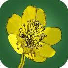 Feldbotanik App