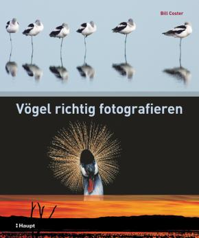 Vögel richtig fotografieren