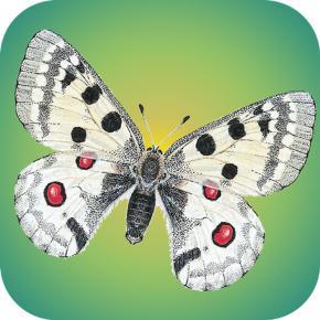 Tagaktive Schmetterlinge