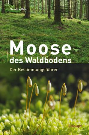 Moose des Waldbodens