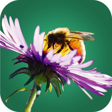 Bienenpflanzen für den Garten