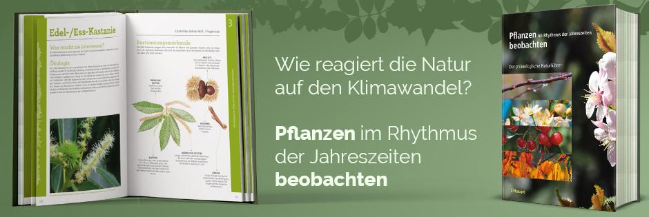 B_ Pflanzen im Rhythmus der Jahreszeiten