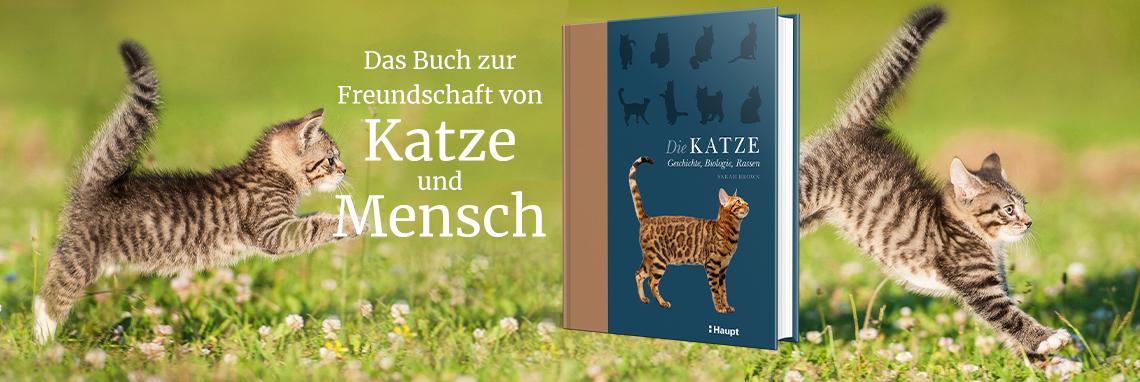 B_ Katze