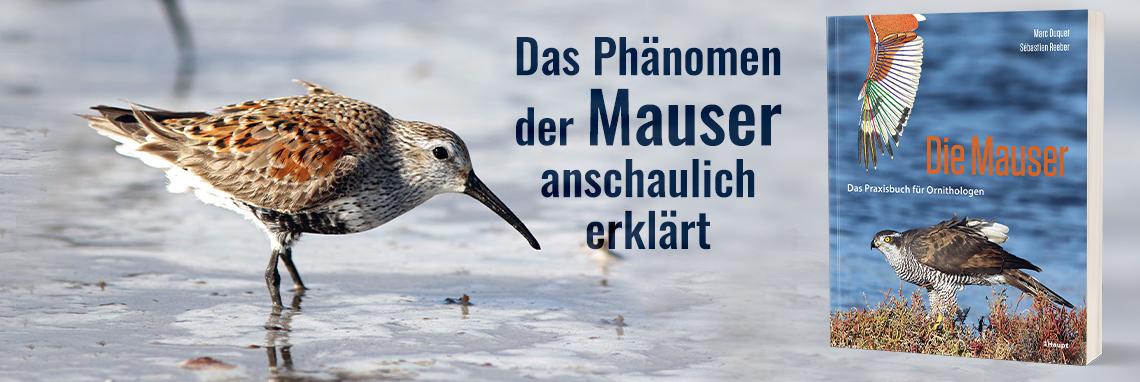 B_ Mauser