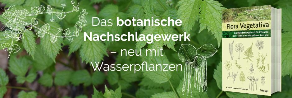 B_ Flora Vegetativa