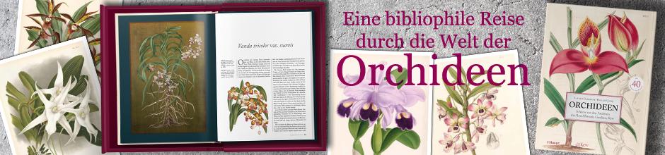 B_ Orchideen