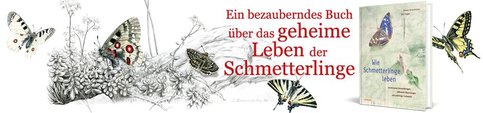 B_ Wie Schmetterlinge leben