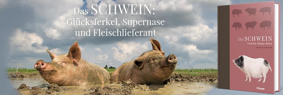 B_ Das Schwein