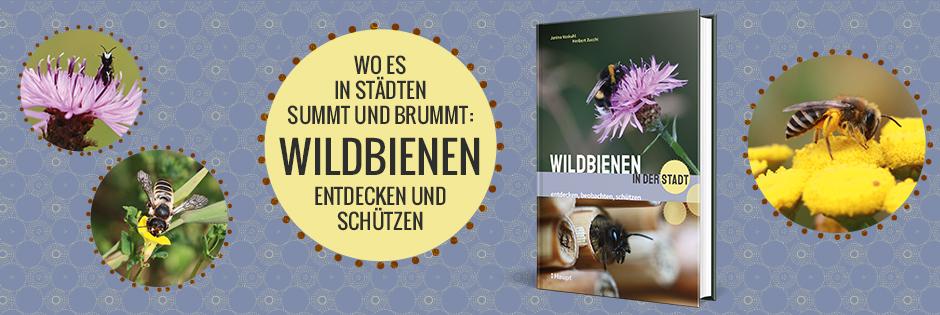B_ Wildbienen in der Stadt