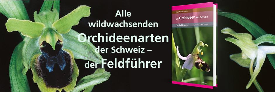 B_ Orchideen der Schweiz